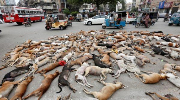 """[Inglaterra] Musulmanes envenenan perros y piden que sean prohbidos """"por respeto al Islam"""""""